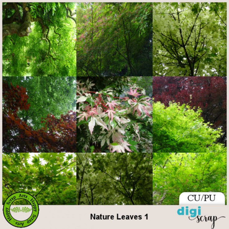 Nature Leaves 1