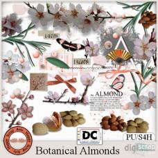 Botanical Almonds elements