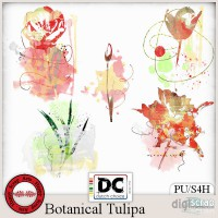 Botanical Tulipa accents