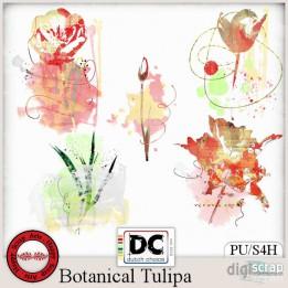 Botanical Tulipa accents