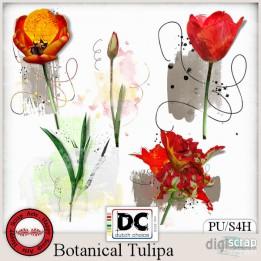 Botanical Tulipa artsy tulips