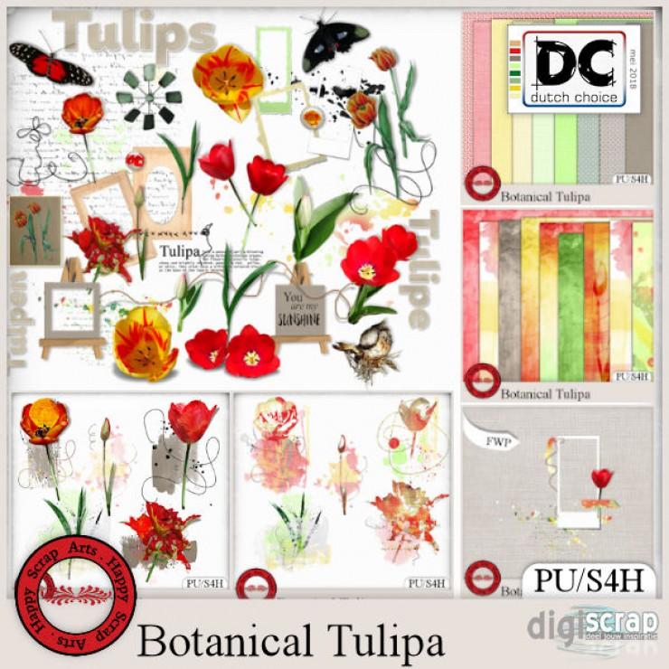 Botanical Tulipa bundle