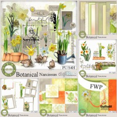 Botanical Narcissus bundle