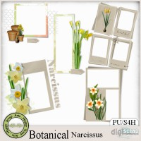 Botanical Narcissus clusters 1