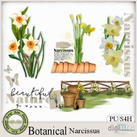 Botanical Narcissus clusters 2