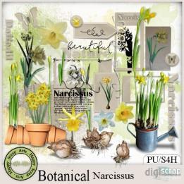 Botanical Narcissus