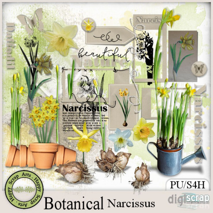 Botanical Narcissus