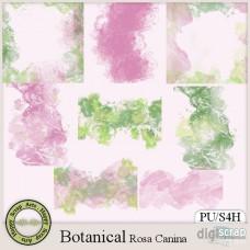 Botanical Rosa Canina overlays