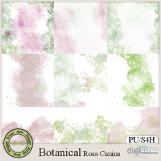 Botanical Rosa Canina papers add on